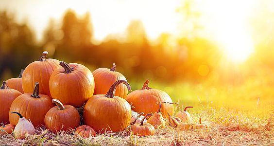 Herbstliche Kürbisausstellung im egapark